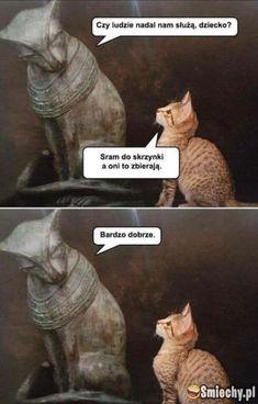 Sad And Useless Humor Site Cute Funny Animals, Funny Animal Pictures, Funny Cute, Funny Images, The Funny, Animal Pics, Cat Memes, Dankest Memes, Funny Shit