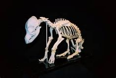 animal skeletons at DuckDuckGo