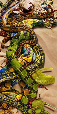 #snake #fauna www.bykoket.com