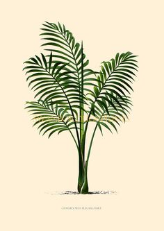 Coastal Living Tropical Palm Trees Beach by swanboroughprints