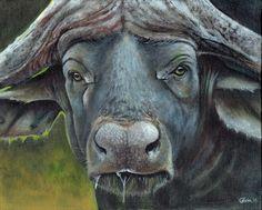 """Day 2: """"Cape Buffalo"""" - Acrylic on Canvas (8 x 10)"""