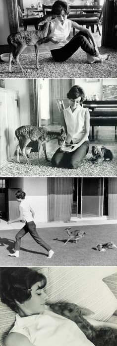 Audrey Hepburn and her pet baby deer, Pippin.Audrey Hepburn and her pet baby deer, Pippin.