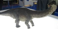 Young Apatosaurus dinosaur model from Papo.