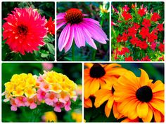 5 Flowers That Thrive In The Summer Heat On Old Time Pottery's Do More for Less