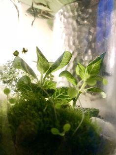 Small Terrarium by Green Carboy www.greencarboy.com Small Terrarium, Green, Plants, Plant, Planets