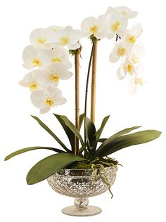 """25"""" Phalaenopsis in Footed Bowl, Faux 