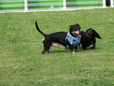 Doggy Action Store - Dog House - dog #DogHouse #DogBed #Dog