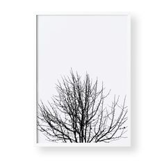 'Naked Silhouette' is a high resolution photographic print taken by yours truly. I have intentionally composed this photograph slightly out of focus to create a whimsical outline of this bare maple tree. Oozing with simplicity this design will be perfect for any living space or bedroom. High Quality Print on 350GSM matte card. Available in A3 and A4 sizes. Larger sizes or custom font colours available upon request.-Frame and accessories not included.-Shipping Charge is...