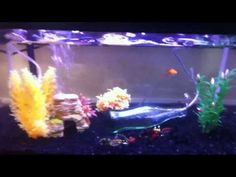 Freshwater Tropical Fish Tank