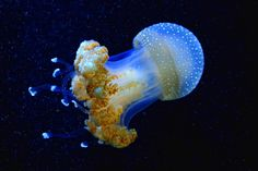 All the mind-blowing pictures you're about to see below are real, raw and untouched by Photoshop. Medusa, Deep Sea Jellyfish, Mind Blowing Pictures, Life Under The Sea, Photoshop, Ocean Creatures, Underwater World, Another World, Ocean Life
