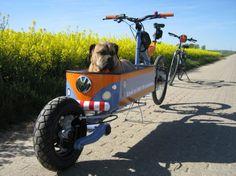 Bullen, Cargo Bike, Tricycle, Cool Bikes, Cool Stuff, Dogs, Bike Trailers, Animals, Skates