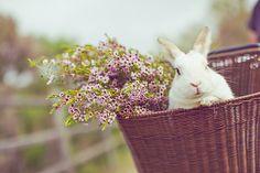 coelhos são tão fofos (: