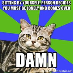 Introvert Cat - Sitting by yourself. person decides you must be lonely and comes over Damn