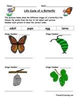 Life Cycle of a Butterfly Worksheet: The pictures below show the different stages of a butterfly's life. Choose the words from the box to tell about each picture. Number each picture to show the correct order. Information: Life Cycle of a Butterfly Worksheet. Butterflies Theme.