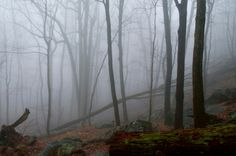12 Eerie Shots In New Jersey That Are Spine-Tingling Yet Magical Blue Ridge, New Jersey, Morris County, Shots, Hiking, Adventure, How To Plan, Mountain, Backpacking