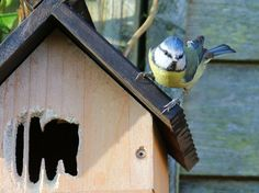 Building Bird Nesting Boxes (With Video) Bird Nesting Box, Nesting Boxes, Garden Ideas Diy Cheap, Coal Tit, Spotted Woodpecker, Common Birds, Gabion Wall, Great Tit, Blue Tit