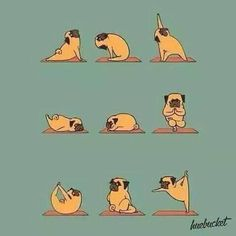 Pug yoga - missing down dog!