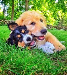 This Pin was discovered by wuvely. Discover (and save!) your own Pins on Pinterest. | See more about Cuddle Buddy and Dogs.