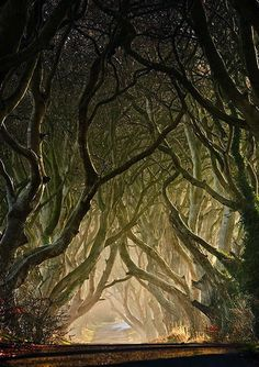 (trees,creepy,forest,pathway,road,nature)  creepy...but beautiful movement <3