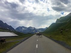 We were delayed by rush hour traffic on the Furka Pass road in Switzerland.