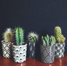 Top Creative DIY Cactus Planters Ideas You Should Copy Right Now no 09 - House Plants Cacti And Succulents, Planting Succulents, Potted Plants, Indoor Plants, Planting Flowers, Cactus Planters, Cactus Pot, Succulent Terrarium, Indoor Gardening