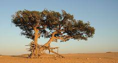La biodiversidad, por debajo de su nivel crítico de seguridad