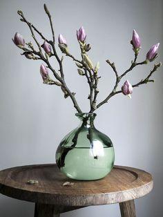 Faszinierende Magnolien, fast zu schade für die Vase