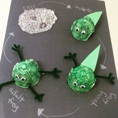 I think this is such a cute way for students to create a frog life cycle. Young students learn about the life cycle of animals, and this way is perfect for them to show it with the arts integrated.