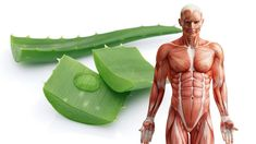 For so long, there has always been talk about Aloe Vera that has been recognized for its great beneficial qualities. Drink Aloe Vera juice: In Aloe Vera juic Remedies For Nausea, Cold Home Remedies, Black Pepper Oil, Essential Oils For Colds, Acne Oil, Perfume And Cologne, Moisturizer With Spf, Medicinal Plants, Natural Cures