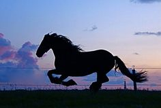 A horse loves freedom, and the weariest old work horse will roll on the ground or break into a lumbering gallop when he is turned loose into the open.