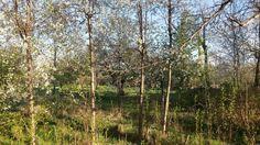 Bir anda artan yeşil tonları...Evliya çelebi seyhatnamesinde Meram'da yeşilin yetmişyedi tonundan bahis ediyor.Evet doğru...