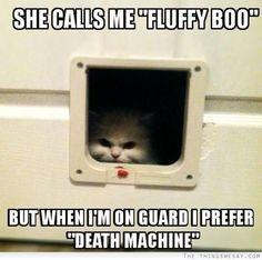 She calls me fluffy boo but when I'm on guard I prefer death machine