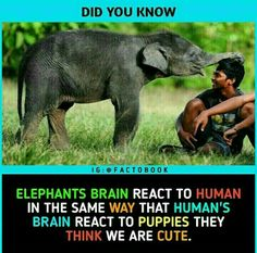 Elephant Brain, Bed For Girls Room, Did You Know, Puppies, Cute, Animals, Cubs, Animaux, Animales