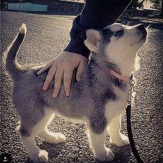 Cachorro meu #Alam_borges_