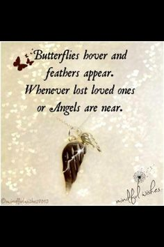 thank you for the butterflies <3