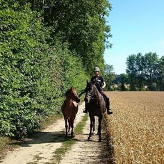 From Charlotte, Ashford  | The Jacksons BIG Equestrian Picture Competition #horse #riding #countryside