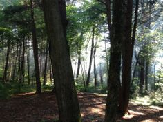 Tucked into the scenic rolling hills of the Western Highlands, 439-acre Black Rock State Park offers a variety of outdoor activities. Steep, wooded ledges covered with pine, hemlock and oak provide the setting for Black Rock Pond.
