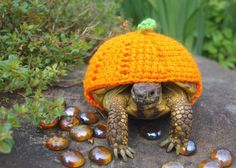 Tort O'Lantern | 18 Cute Cozies Your Tortoise Can Rock This Winter