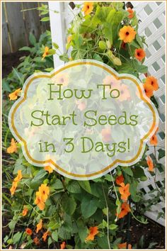 How to start seeds in 3 days! Great tip for last minute gardeners...like me!