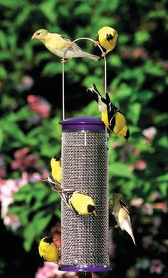 Wild Birds Unlimited: Is There a Way to Attract More Goldfinches to My Yard?