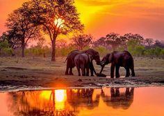 Elephant sunset ..
