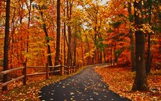 Pretty Woods Scenery | Autumn Road - Forests & Nature Background Wallpapers on Desktop Nexus ...