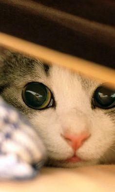 #CaT #CaTs #PeTs & #AniMals https://www.pinterest.com/moycomp/pets-animals-puppy-dog-cat