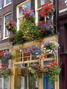 Google Image Result for http://www.thegardenglove.com/houes_of_flower_containers_med.jpg