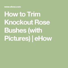 How to Trim Knockout Rose Bushes (with Pictures) | eHow
