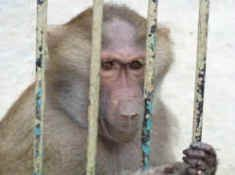 Stop the exploitation of animals in laboratories :'(월드카지노월드카지노월드카지노월드카지노월드카지노월드카지노월드카지노월드카지노월드카지노월드카지노월드카지노월드카지노월드카지노월드카지노월드카지노월드카지노 월드카지노월드카지노월드카지노월드카지노 월드카지노월드카지노월드카지노월드카지노월드카지노월드카지노월드카지노월드카지노월드카지노월드카지노월드카지노