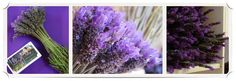 Come pick lavender at the Swellendam Lavender Farm Stuff To Do, Things To Do, Easter Celebration, Holiday Activities, Lavender Oil, Craft Gifts, Save Energy, Anniversary Gifts, South Africa
