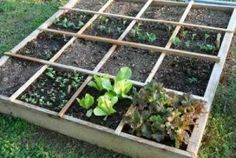 Download your FREE 8 page guide to Square Foot Gardening by clicking here