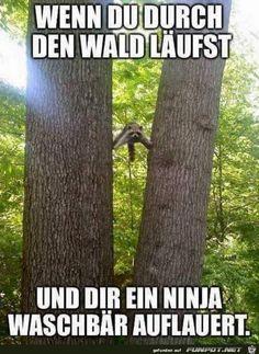 lustiges Bild 'Ninja Waschbär.jpg'- Eine von 24546 Dateien in der Kategorie 'witzige Bilder' auf FUNPOT.