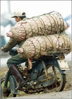 Thats COOOOOL !!!!!: TranspOrtation OverLoaded  No, it's more like TRANSPORKATION !